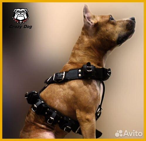 Шлейка кожаная с утяжелителями для собак - купить, продать или отдать в Кировской области на Avito - Объявления на сайте Avito