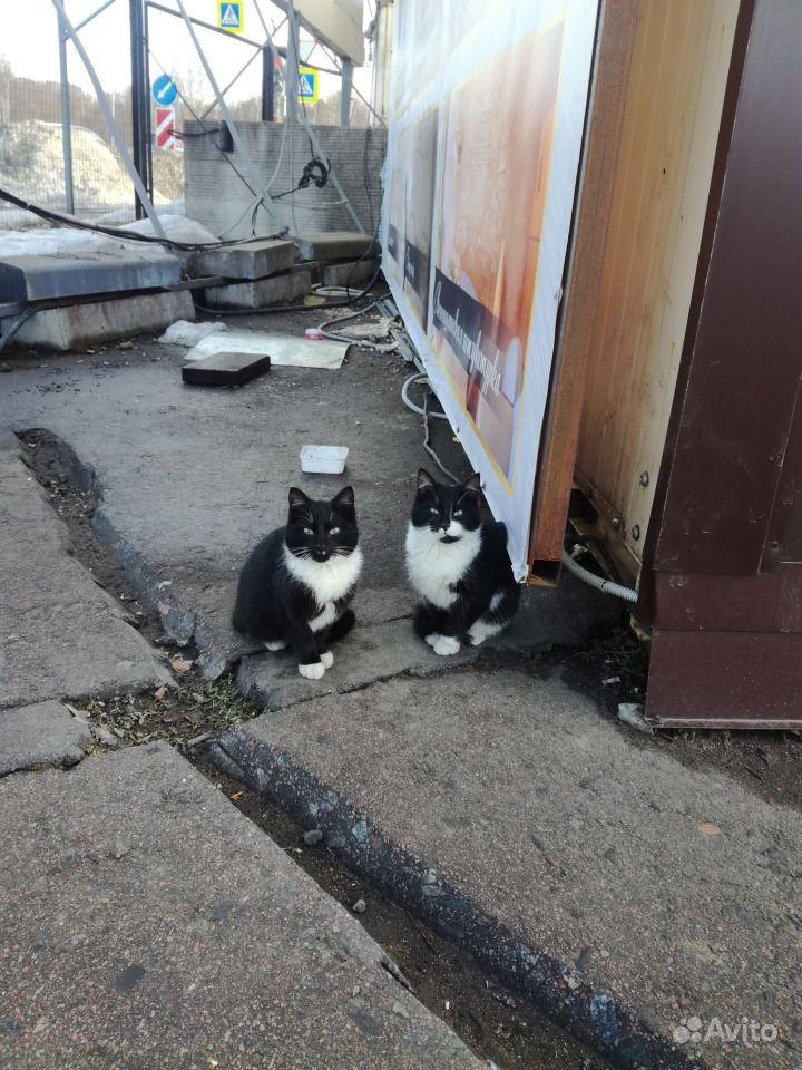 Маша и Даша ищут дом