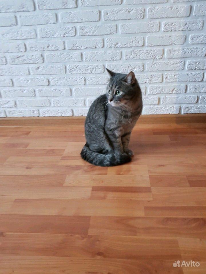 Отдадим котика в Краснодаре - фотография № 1