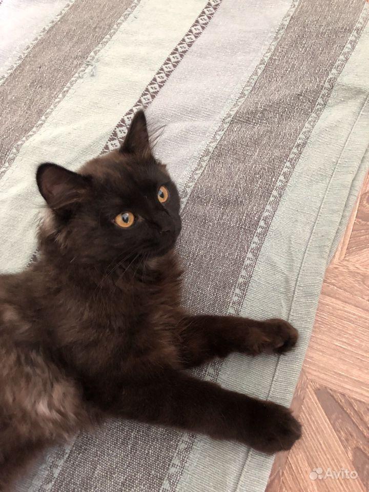 Отдаю котика в Сыктывкаре - фотография № 2