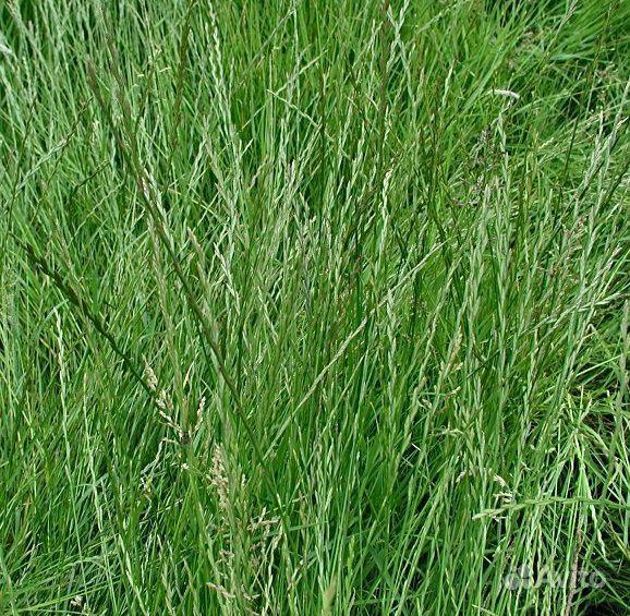 Трава для корма животных (со своего огорода)