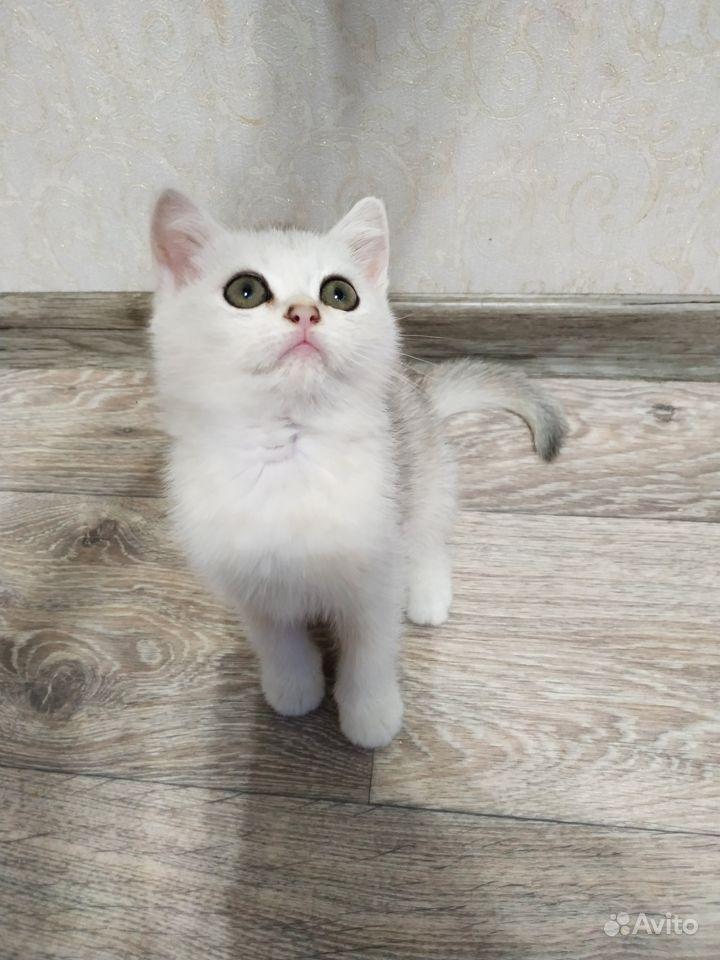Милый котик Alen