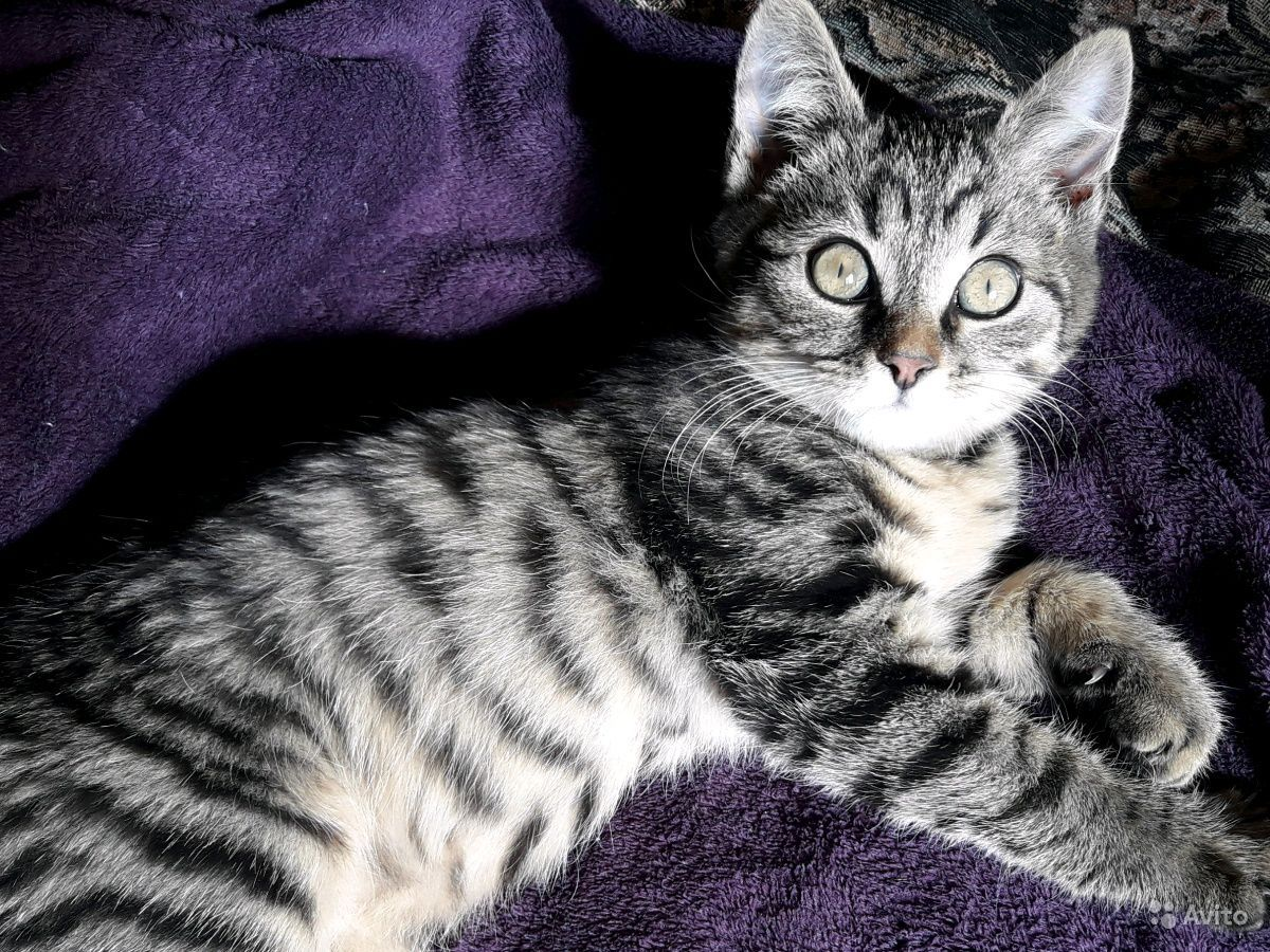 Котенок в добрые руки