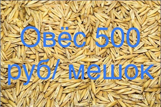 Семена трав купить на Зозу.ру - фотография № 3