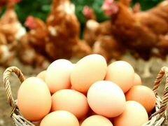Яйцо куриное домашнее свежее крупное