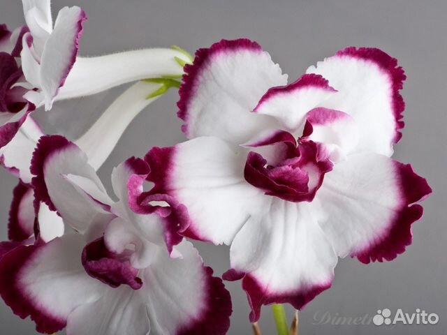Купить цветы на авито в екатеринбурге