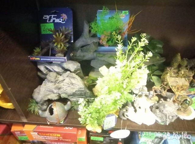 Decorations for aquarium 89081257208 buy 5