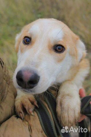 Чудесная собака подросток в дар купить на Зозу.ру - фотография № 3