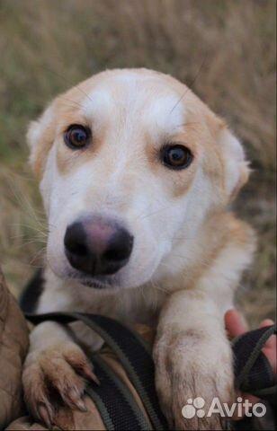 Собака щенок Эви в добрые руки бесплатно купить на Зозу.ру - фотография № 1
