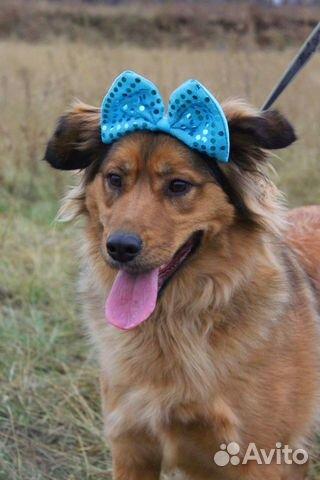 Семейная собака Джесс в дар купить на Зозу.ру - фотография № 4