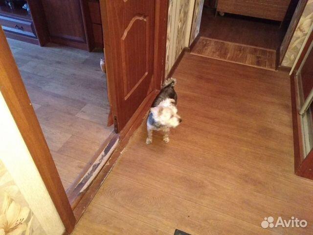 Отдам собаку в хорошие руки бесплатно купить на Зозу.ру - фотография № 2