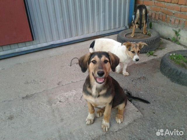 Собаки в надежные ответственные руки  89178080969 купить 2