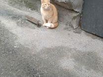 Рыжий кот ищет дом