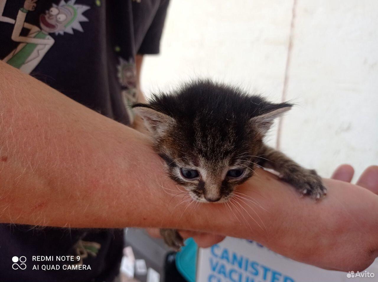 Котята в добрые руки  89055855983 купить 3