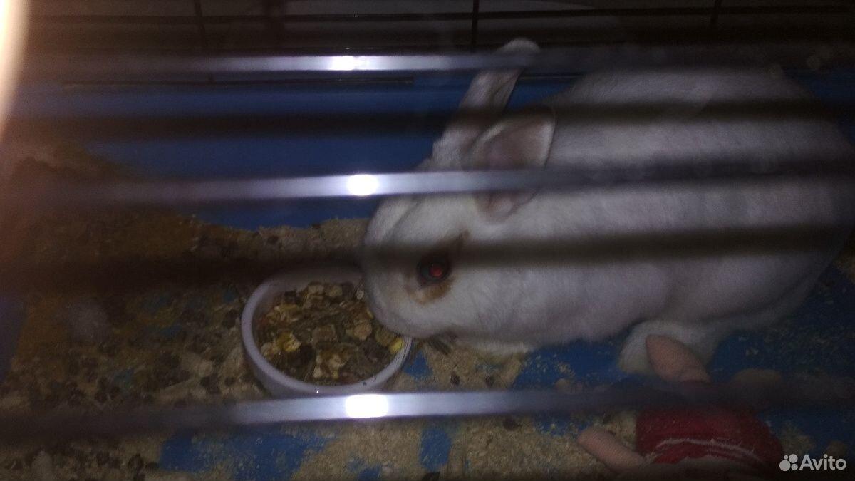 Кролик  89991156657 купить 2