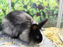 Продаются декоративные кролики