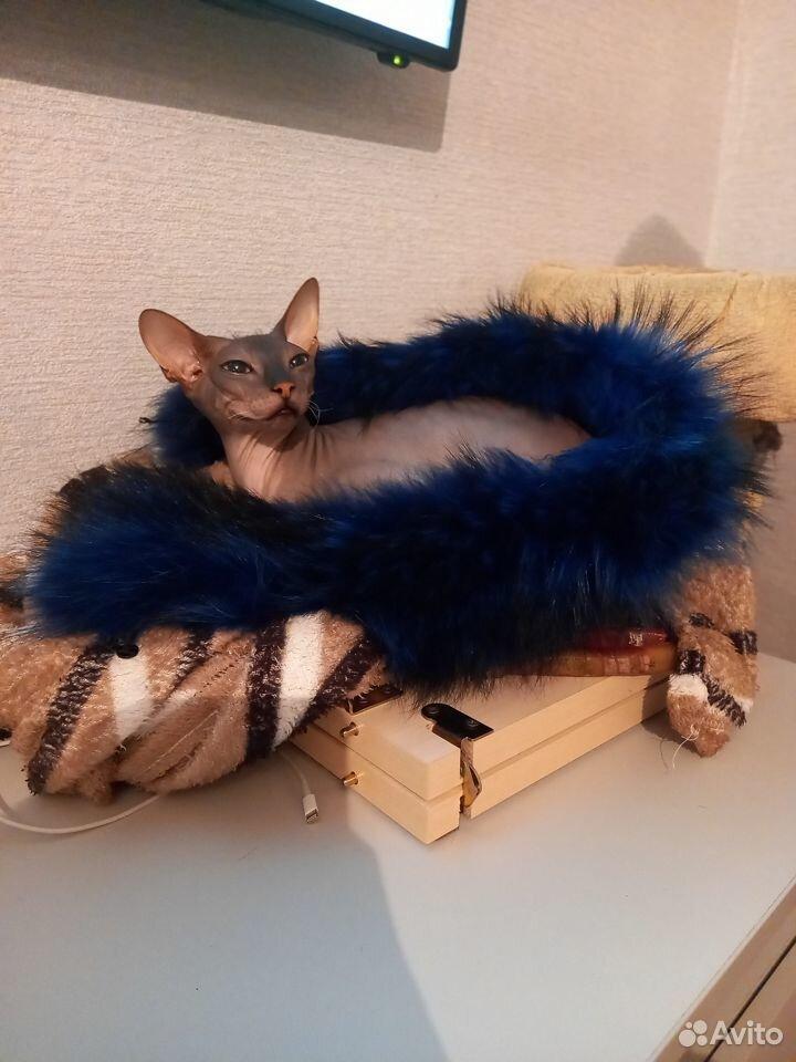 Продаю донского сфинкса- котята  89080035509 купить 1