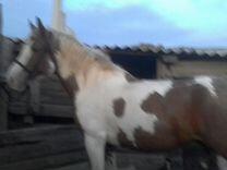 Прадаётся лошадь