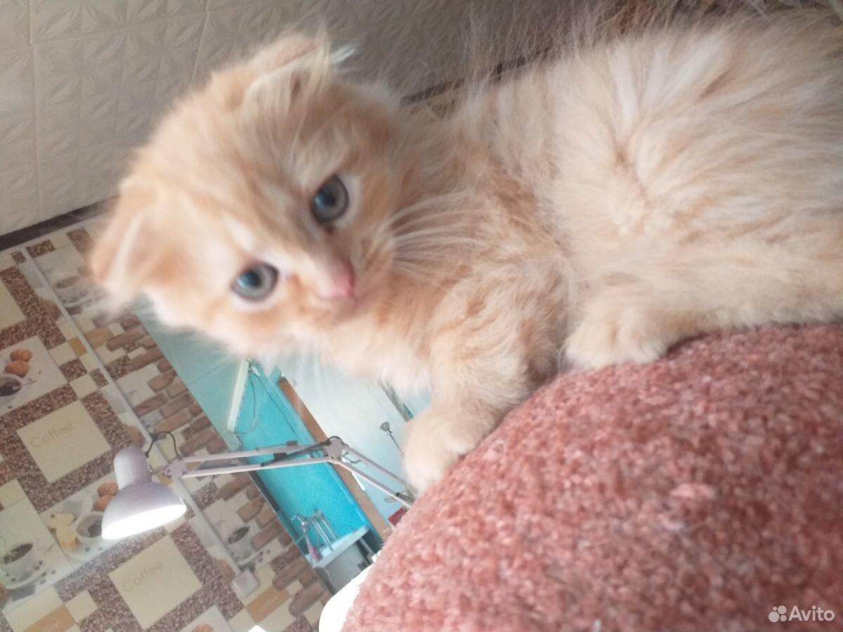 Продаю котят  89228220557 купить 3