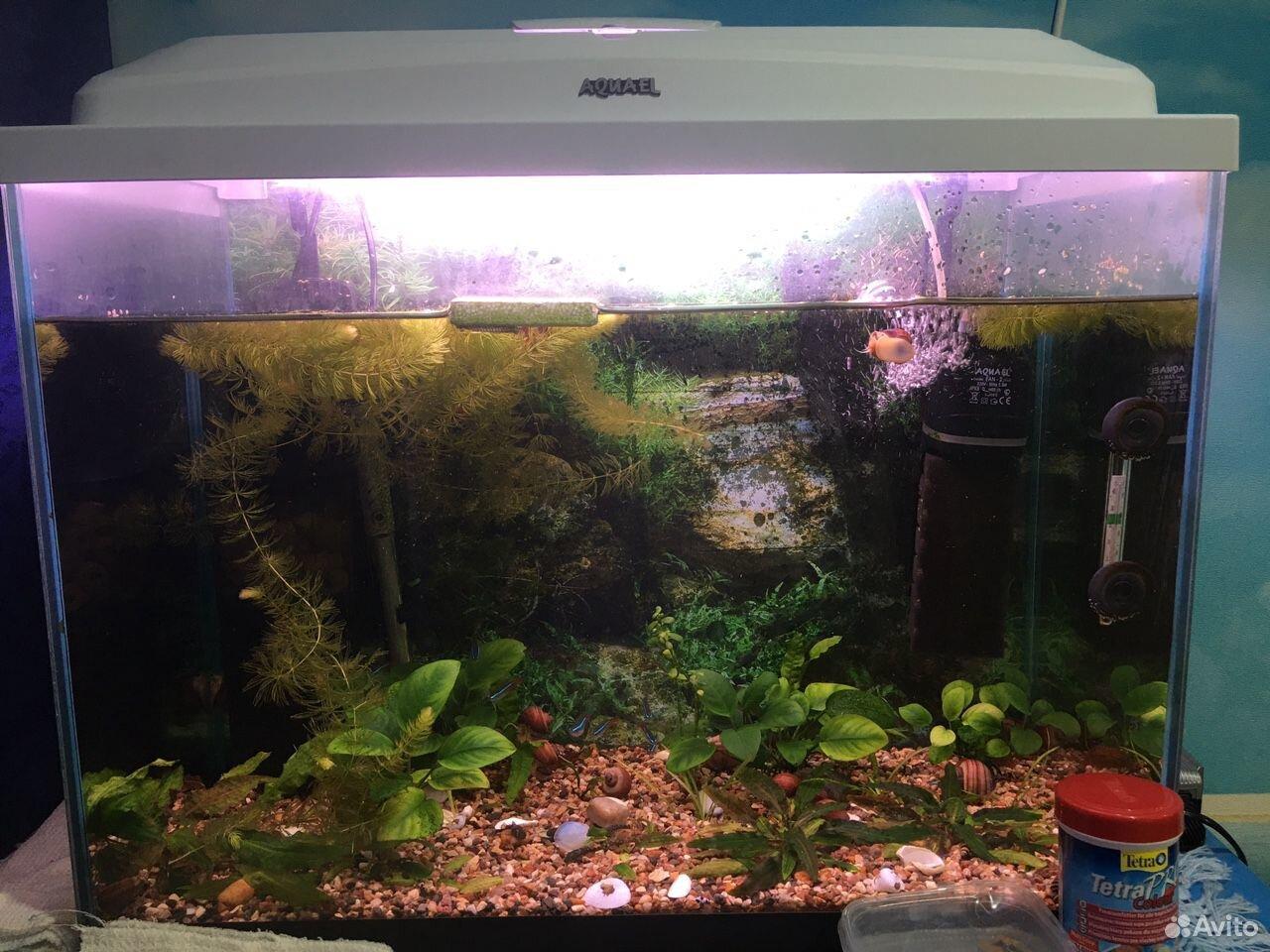 Aquarium 89825525555 buy 1