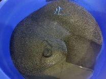JBL Sansibar Dark 23 кг