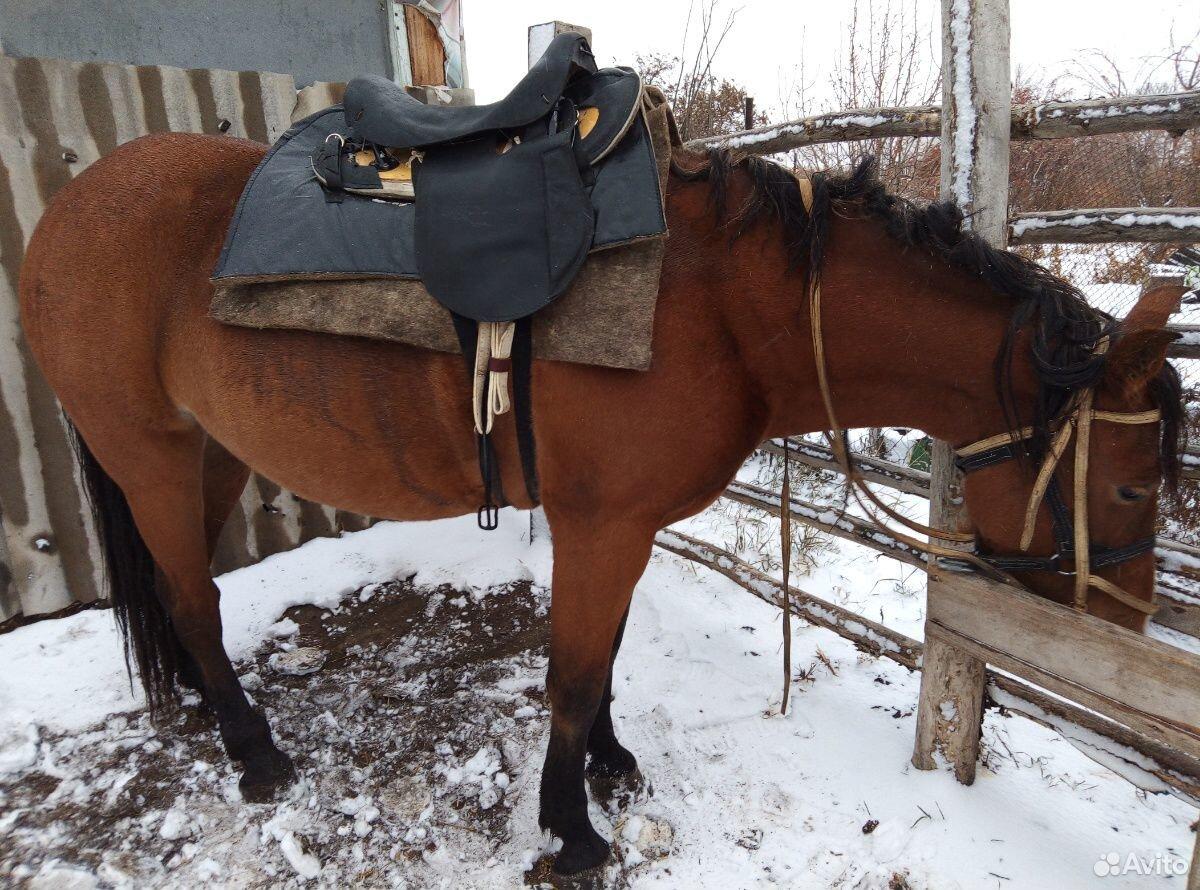 Лошадь  89236928993 купить 2