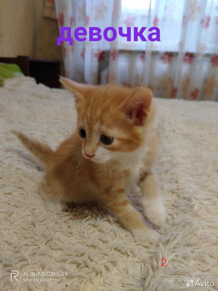 Отдам миленьких котят  89039946144 купить 5